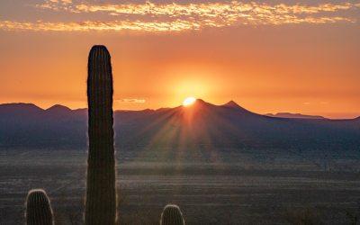 Petrified Forest and Saguaro Tour